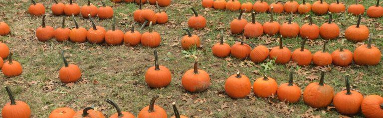 Annual F.L.E.A. Pumpkin Decorating PRIDE Event